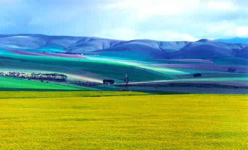 南非花园大道沿路风景图片
